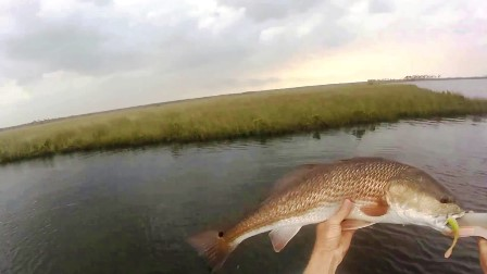 "October 17, 2018...""Fly Fishing the Chassahowitzka River System"" with Scott Hennet (TENTATIVE)"